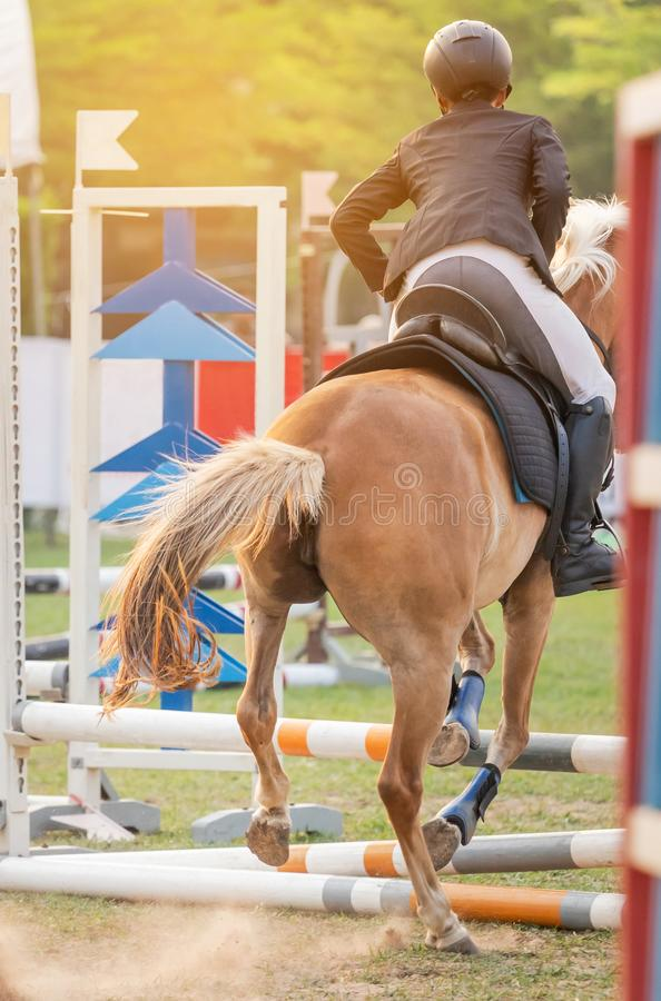 Close up action equestrian rider horse jumping over hurdle obstacle stock images
