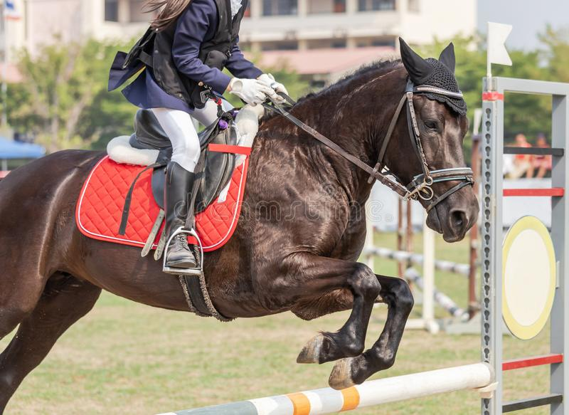 Close up action equestrian rider horse jumping over hurdle obstacle during dressage test competition. In race course royalty free stock photo