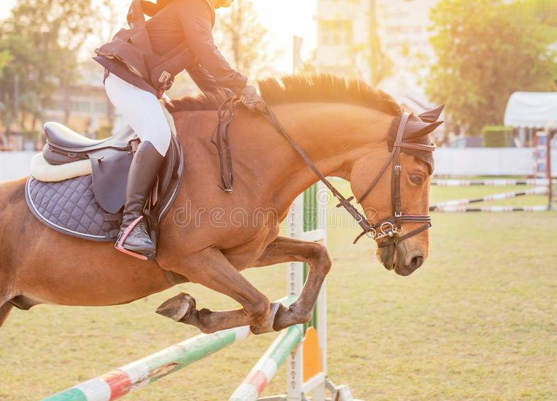 Equestrian rider horse jumping over hurdle obstacle during dressage test competition. Close up action equestrian rider horse jumping over hurdle obstacle during royalty free stock image