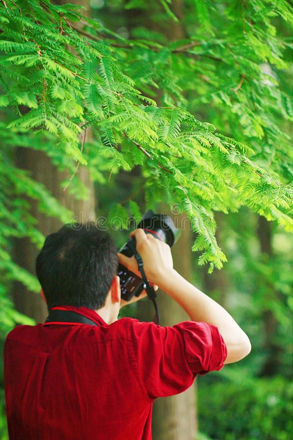 Close up Aisan Chinese man photographer hold camera work in nature shot maple royalty free stock photos