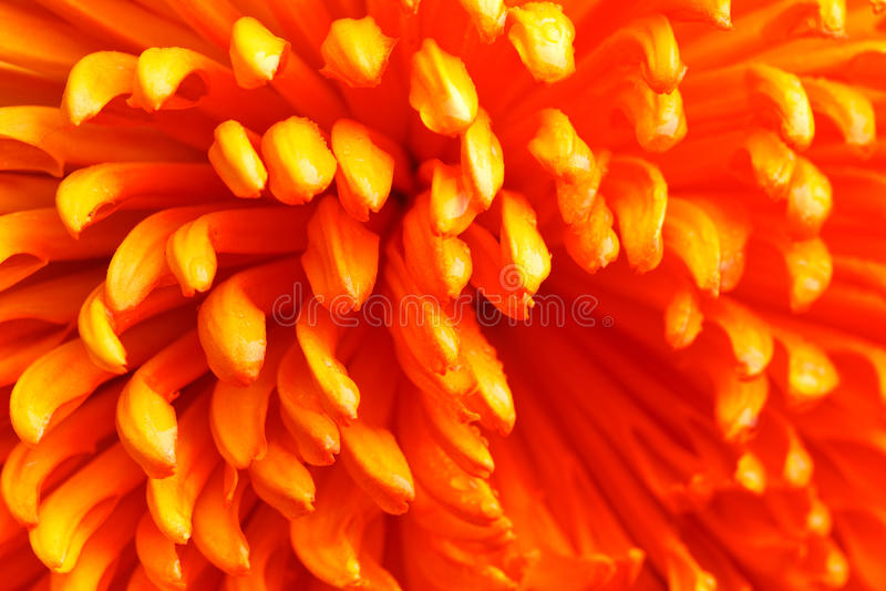 Close up alaranjado da flor imagem de stock royalty free
