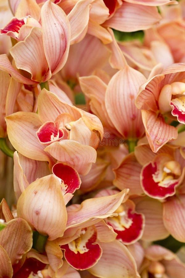 Close up alaranjado das orquídeas foto de stock royalty free