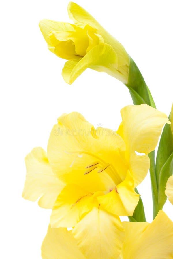 Close up amarelo bonito do tipo de flor imagem de stock