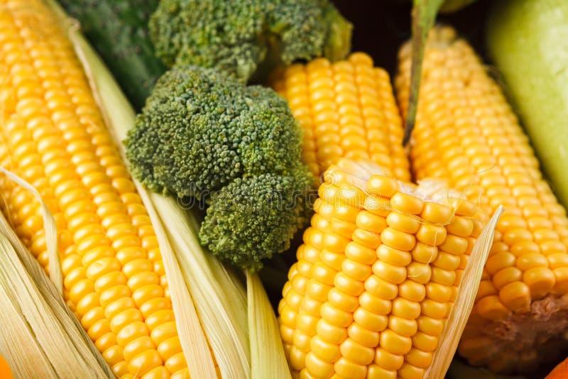 Close up amarelo fresco da espiga de milho, fundo imagens de stock royalty free