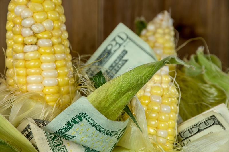Corn on the cob with money royalty free stock images