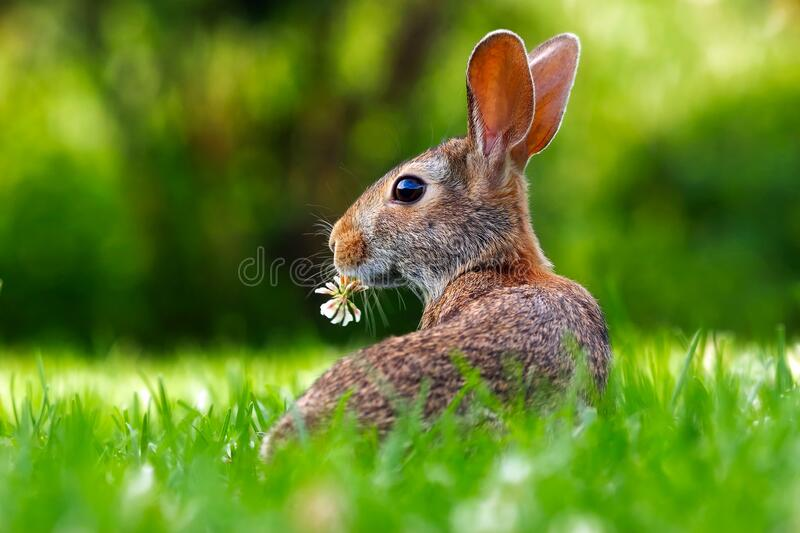 Close-up of an Animal Eating Grass royalty free stock images