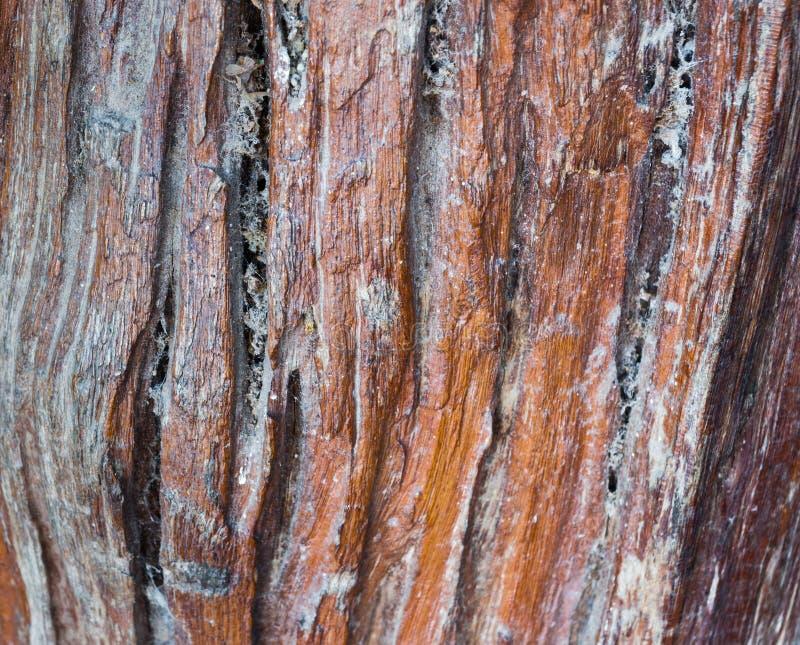 Close up ao fundo velho vertical sujo da folhosa fotos de stock royalty free