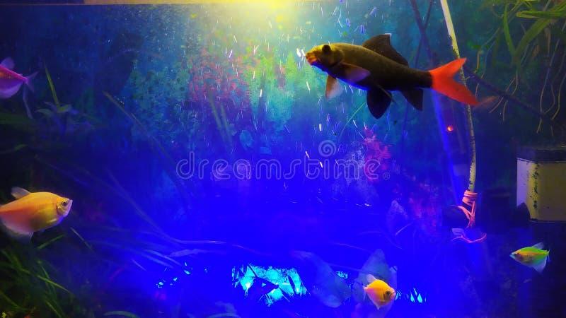 close up aquarium fish stock image