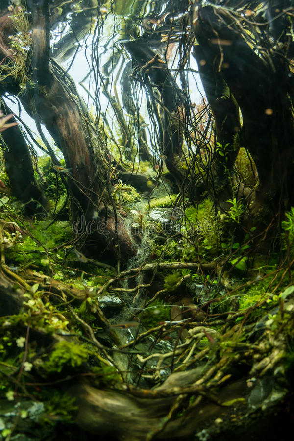 Close up aquarium tank. With dark forest concept stock photos