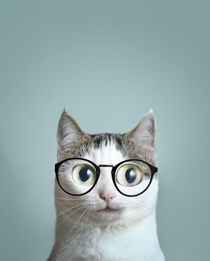 Close up portrait of blue eyed cat stock photos