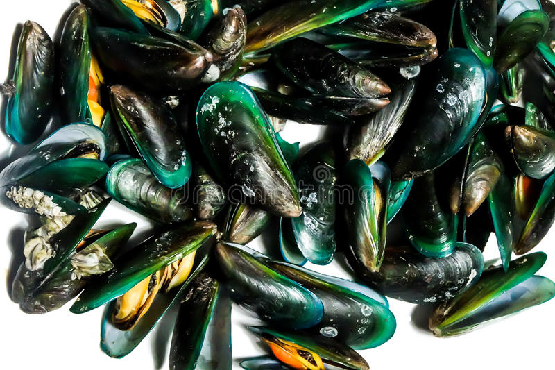 Close up Asian Green mussels shell background stock image