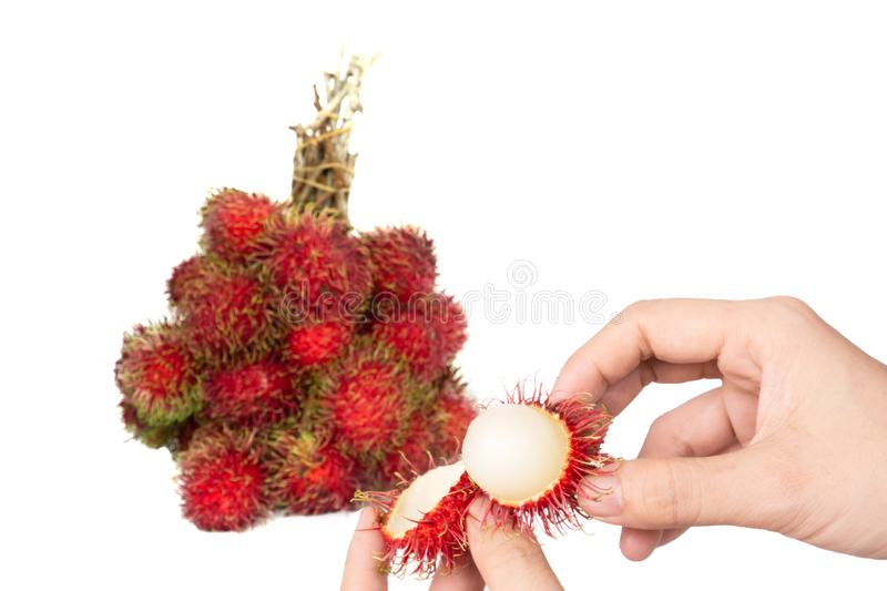 Close up asian woman hand holding a bunch of delicious red rambutan from rambutan tree isolated on white background with clipping royalty free stock photos