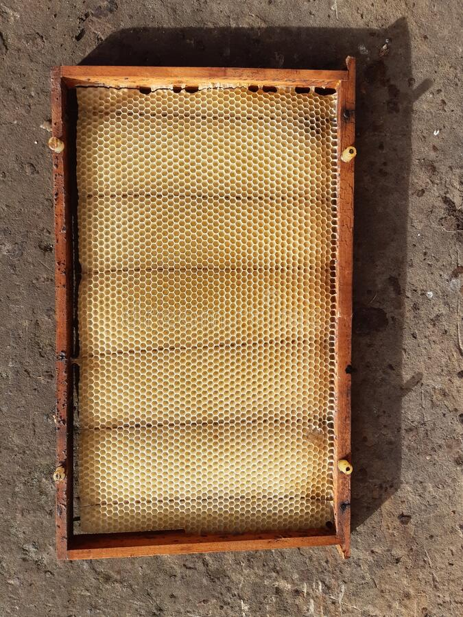 Close-up of baby hands on yellow honeycomb in background honey bees bee hives royalty free stock photos