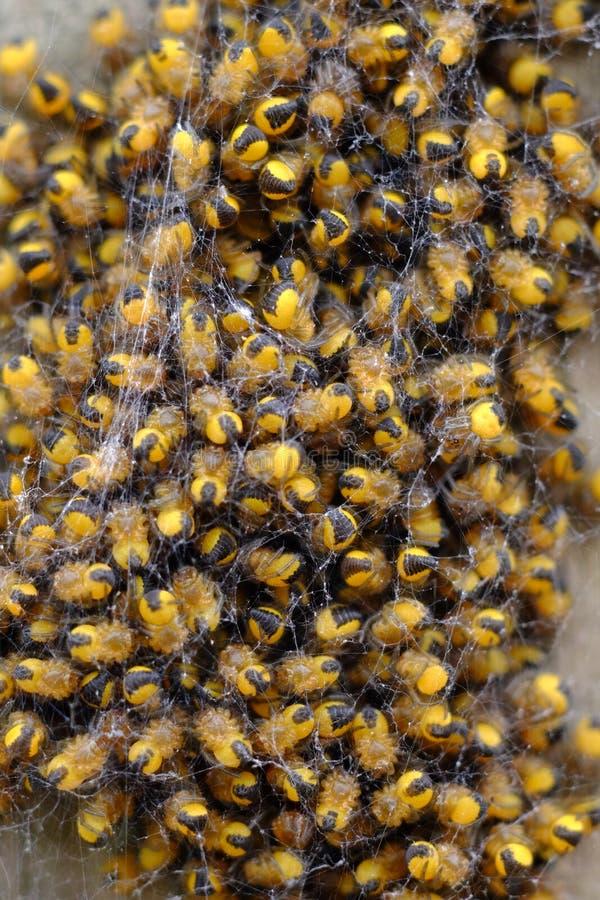 Baby spider nest stock photo