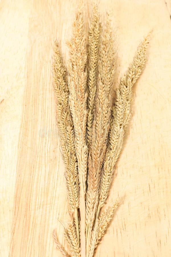 Closeup of Background group brown dry grass on brown wooden. Close up of Background group brown dry grass on brown wooden royalty free stock photo