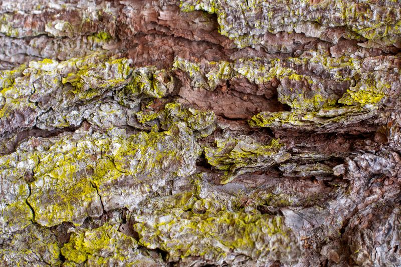 Close Up Background of Pine Tree Bark and Moss stock images