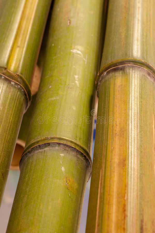 Close up of bamboo. Close up image of wild bamboo stalk at the joints stock photo