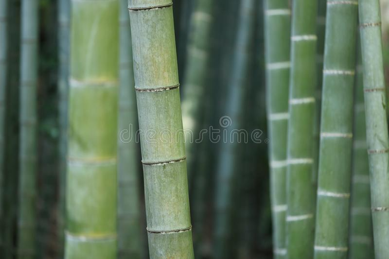Close Up Of Bamboo Stalks Free Public Domain Cc0 Image