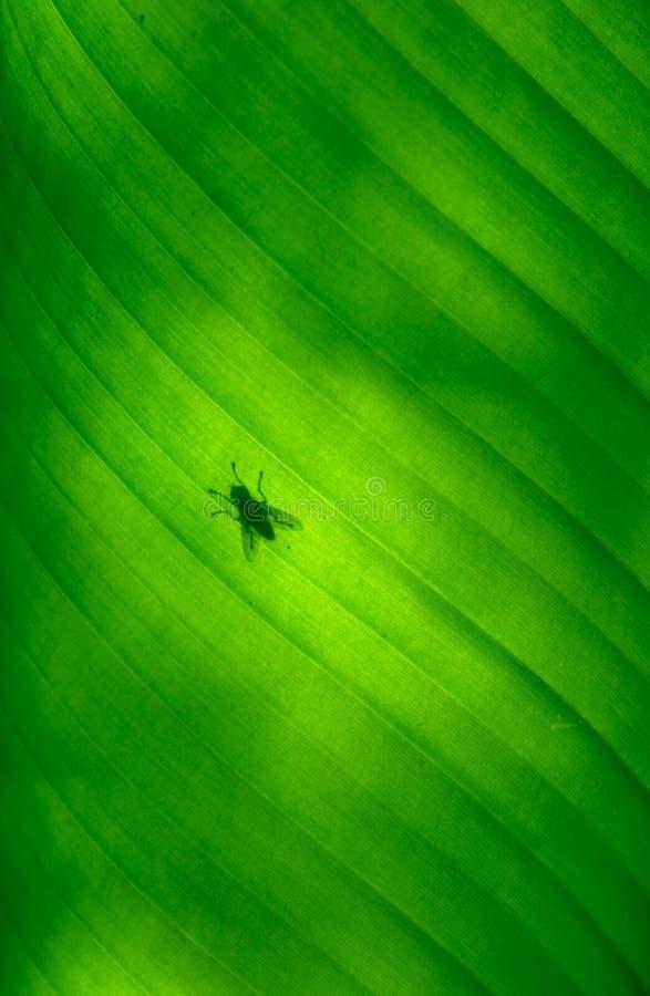 Close-up of a banana palm tree leaf stock photo