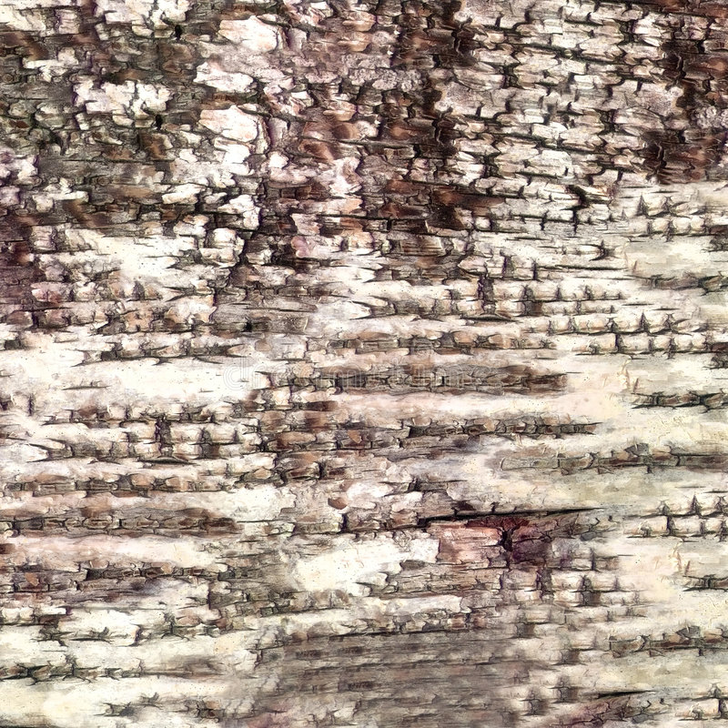Close-up bark of birch texture stock images