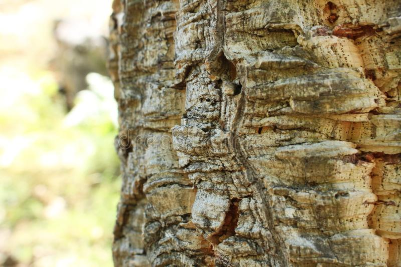 Close up of bark from a cork oak tree from Portugal. Nature shallow depth of field. stock photography