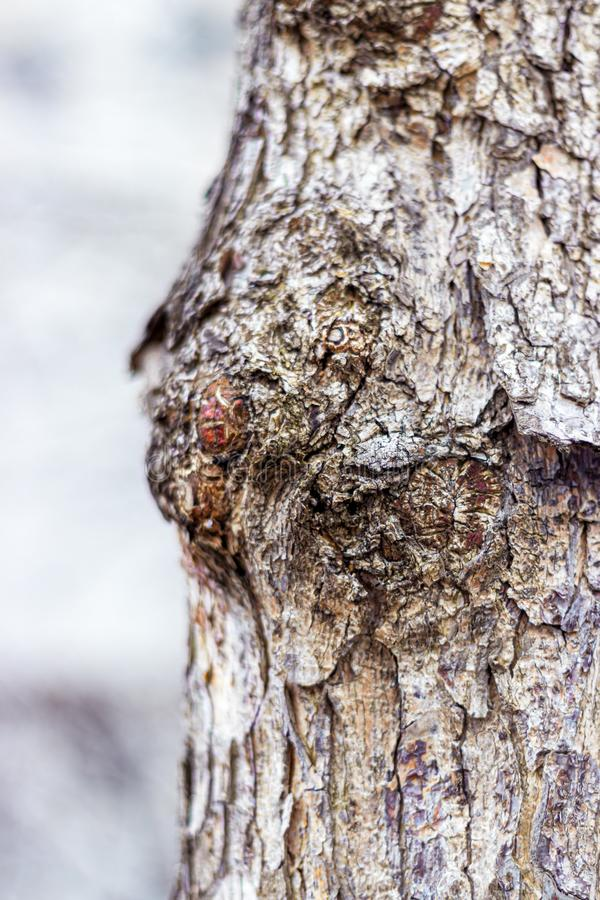 Close-up of the bark of a tree trunk royalty free stock photo