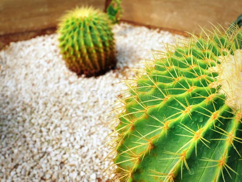 Close-up Barrel Cactus with Selective Focus stock image
