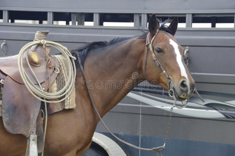 Western Saddle Stock Images - Download 6,749 Royalty Free Photos