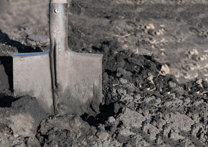 Close-up of bayonet spade into the soft earth. They`re digging u stock images