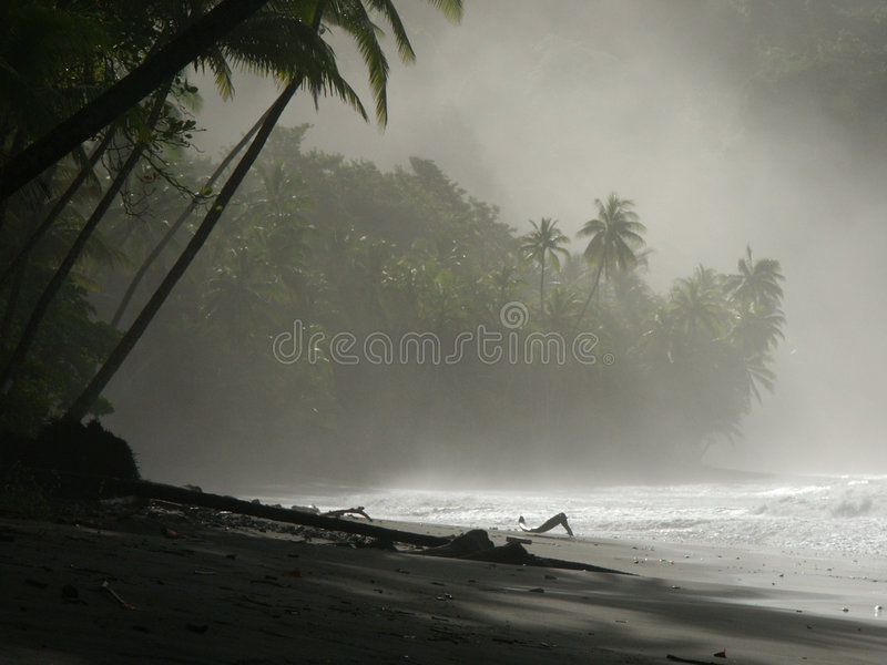 Download Close-up of the beach stock image. Image of palmtrees, clouds - 35153