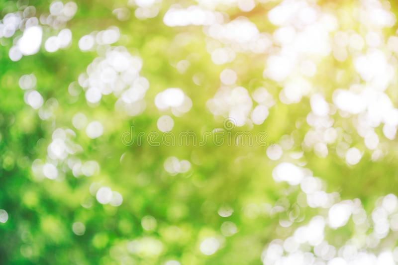 Close up beautiful abstract bokeh greenery nature background with copy space. Colorful outdoor blurred green plants landscape with royalty free stock image