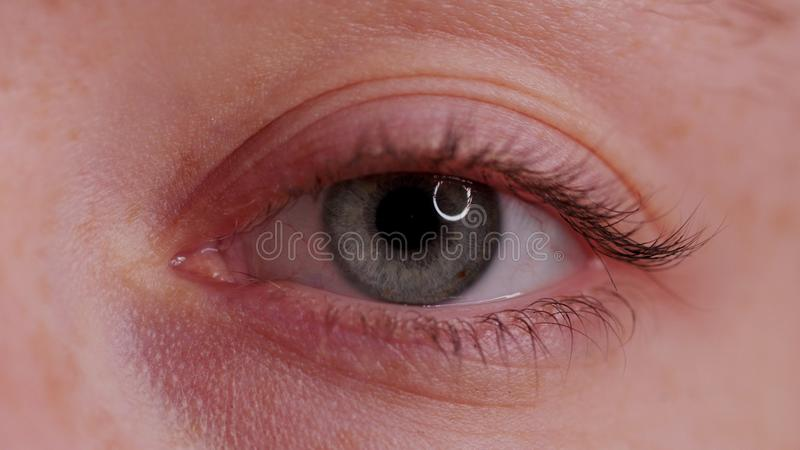 Close-up Beautiful Blue Eye royalty free stock image