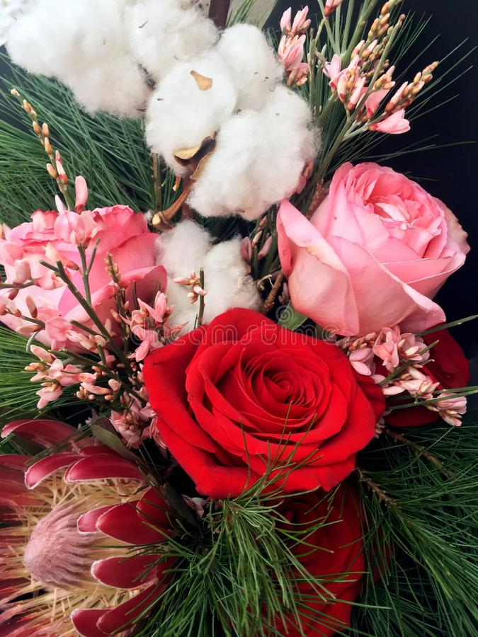 Winter bouquet of white and red flowers. Flowers bouquet including red and pink roses, pink genista, protea, fir branches and royalty free stock photo