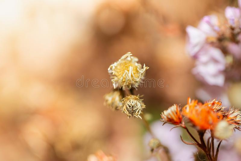 Close up Beautiful dried flowers on bright background blur. stock photo