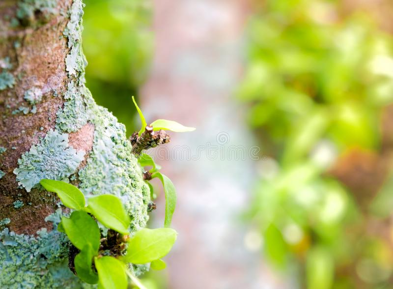 Beautiful green lichen, moss and algae growing on tree trunk. Close-up of beautiful green lichen, moss and algae growing covered on tree trunk in the garden stock photo