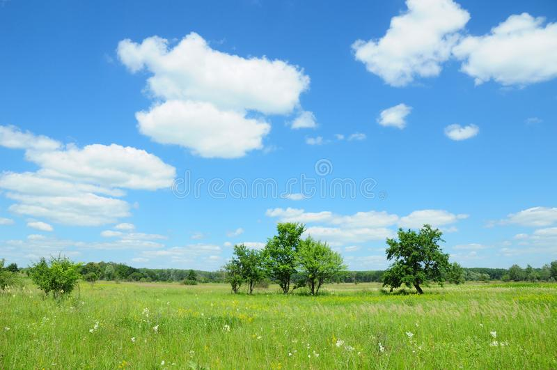Beautiful meadow with trees. Climate changes. stock images