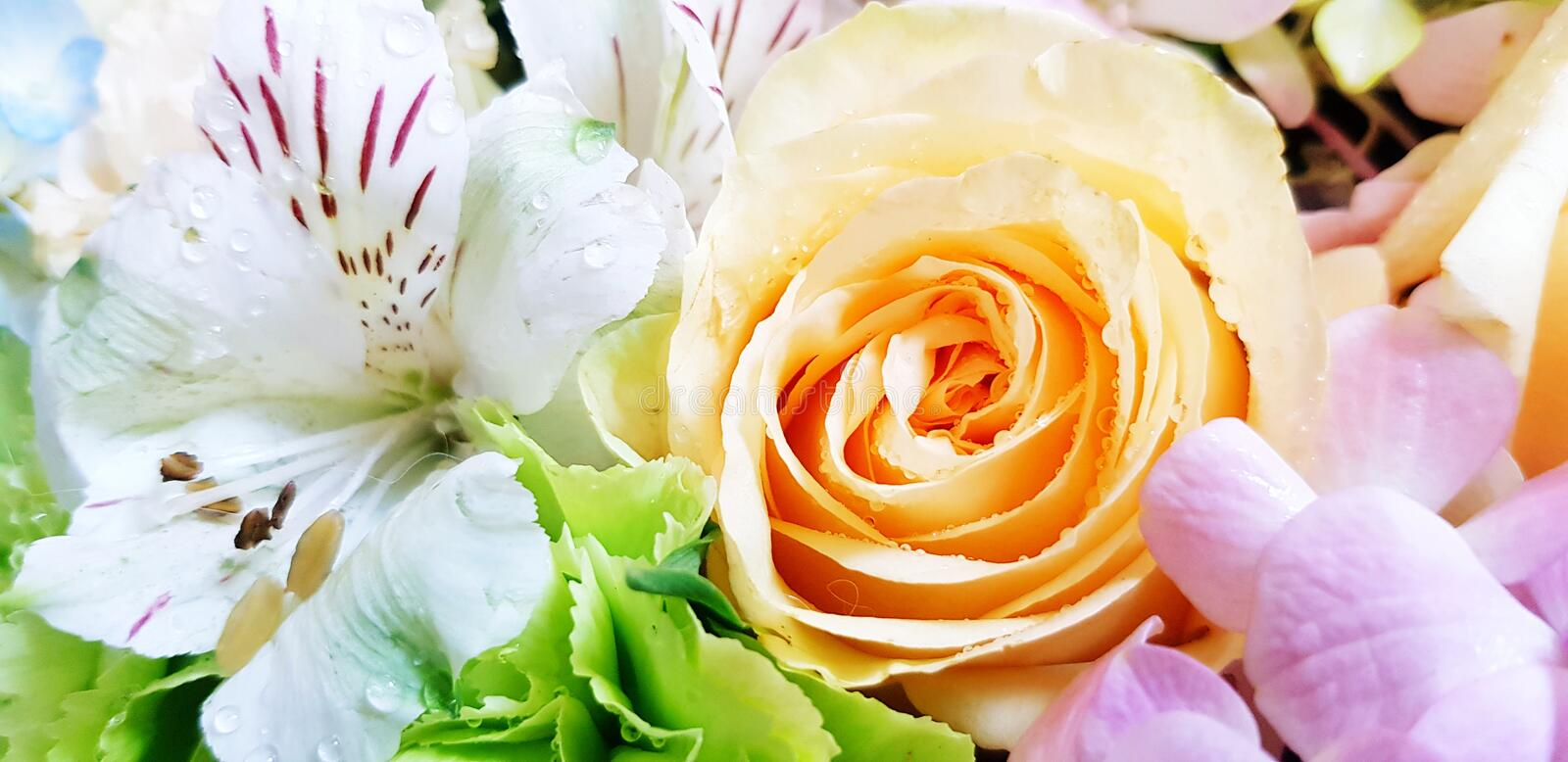 Close up beautiful orange rose and flowers blooming for background stock image