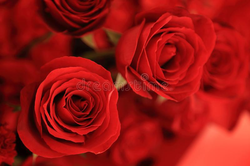Close up of beautiful red rose in flower bouquet for valentine. royalty free stock photography