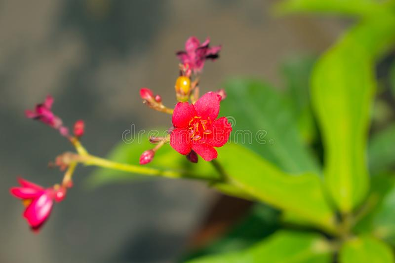 Close up of a beautiful red spring flower with blurred background royalty free stock photography