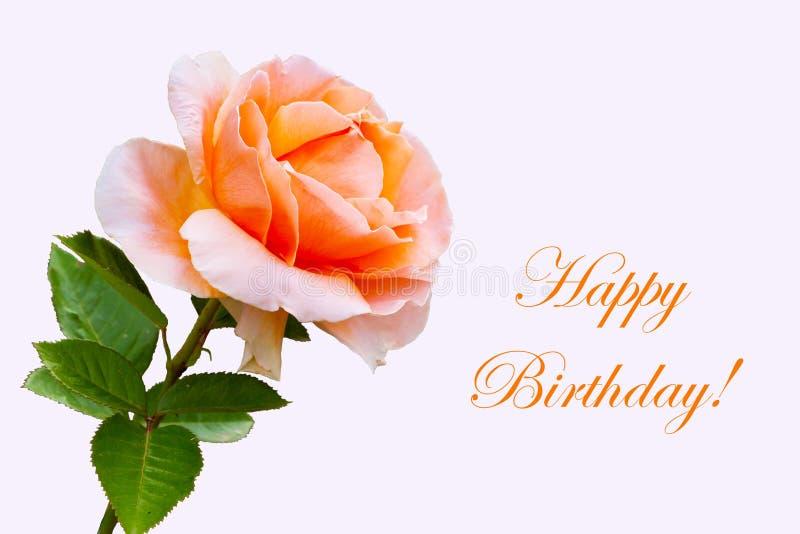 Close-up beautiful rose flower, happy birthday card stock photos