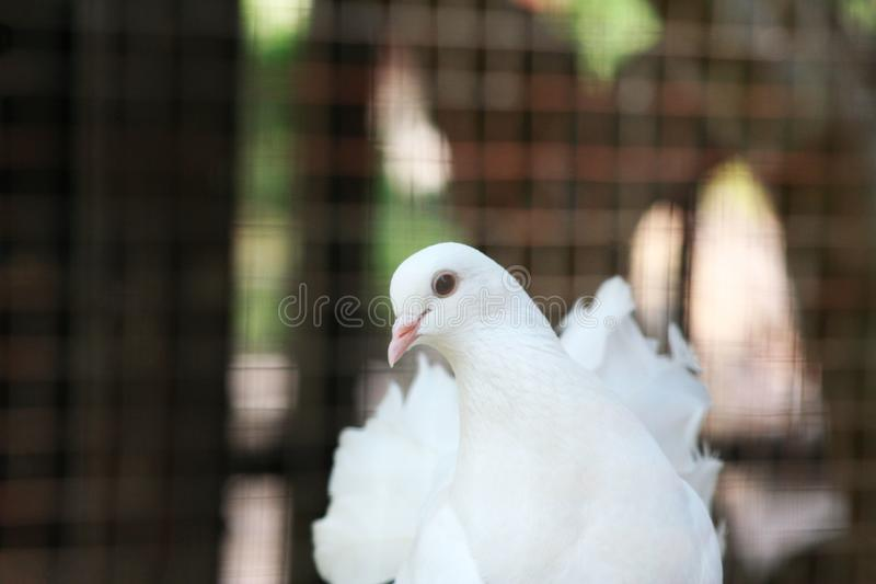 Beautiful white bird. Close up beautiful white bird background stock photo