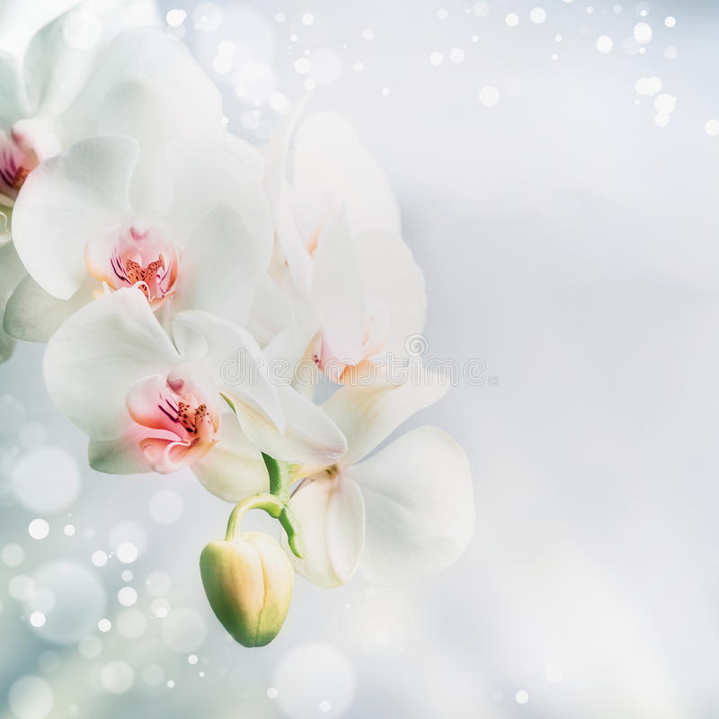 Close up of Beautiful white orchid flowers at blue background with bokeh. Nature , spa or wellness concept stock photos