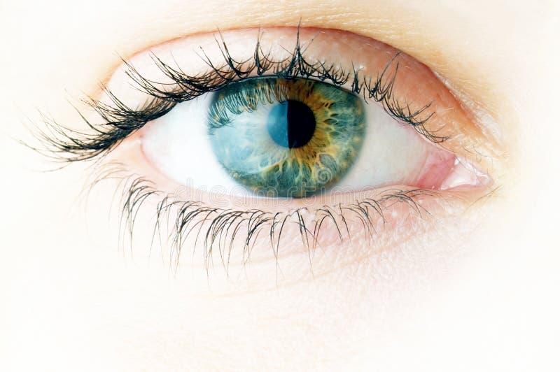 Close-up of beautiful woman eye stock photos