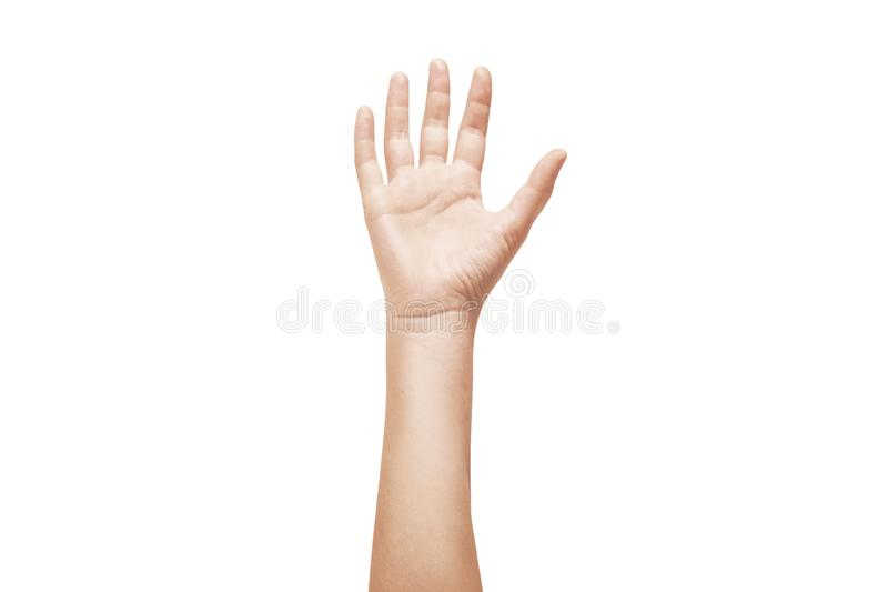 Close-up of beautiful woman`s hand isolated on white background royalty free stock photography