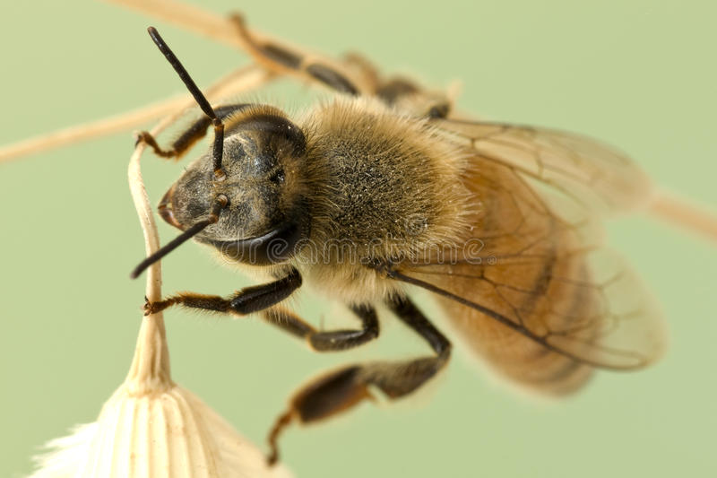 Close-up bee stock photos