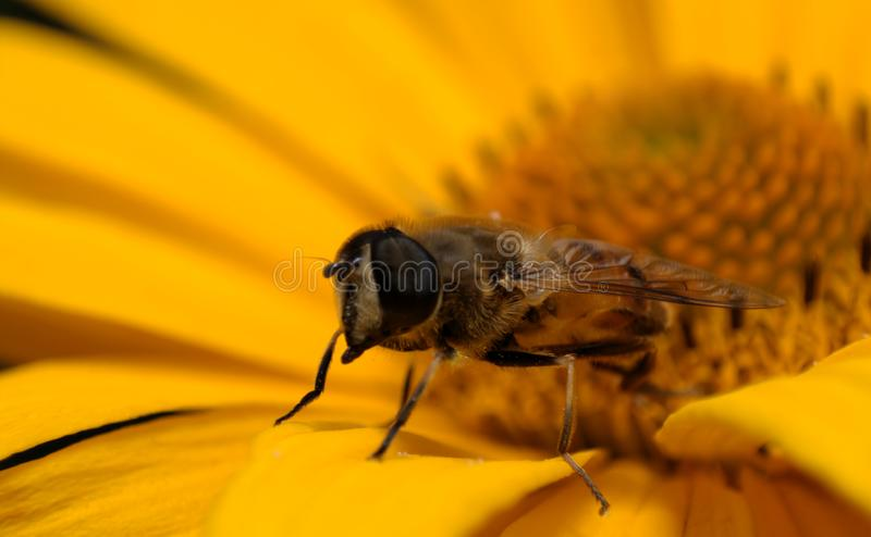 Close up bee stock photography