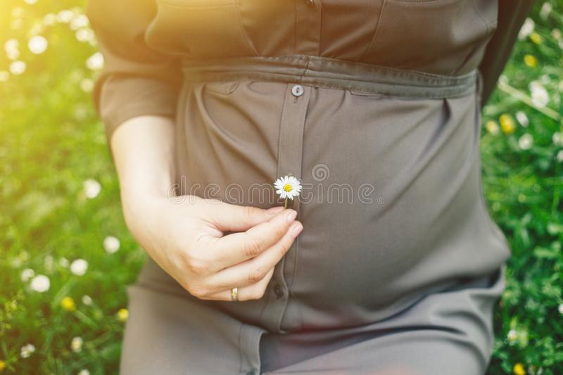 Close up of belly of a pregnant woman holding a daisy flower in a summer park stock image