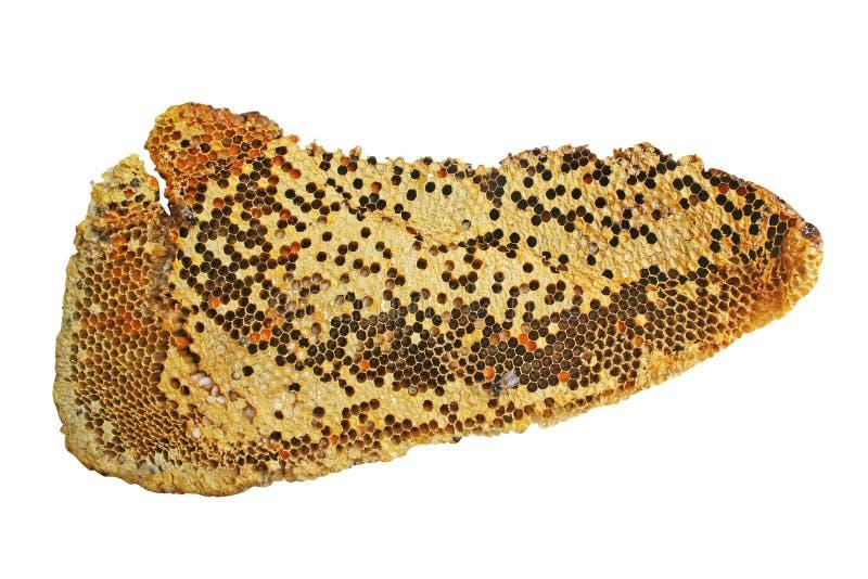 Big honeycomb isolated on white background royalty free stock photography