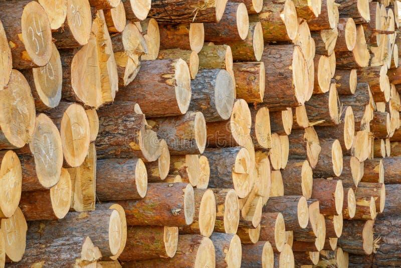 Big pile of logs. Close-up Big pile of logs n royalty free stock image