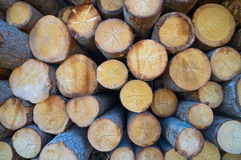 Big pile of logs. Close-up big pile of logs n stock photo